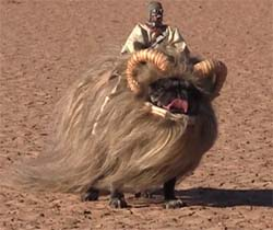 Bantha dog from Star Wars.