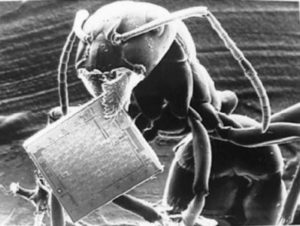 ant-and-microchip