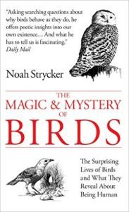 MagicMysteryBirds